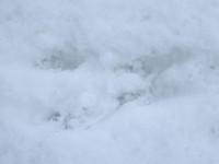 Kdo tu skákal hop a hop, sníh nám poví podle stop...