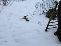 Tudy se pohybovala veverka.