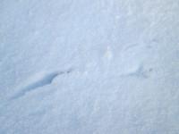 Ptačí stopy - na naší zahradě je živo i v zimě!