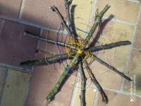 Amálka Z. a její pavučinka