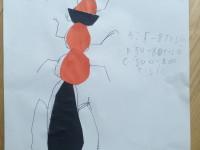 Vilda Š. Mravenec lesní