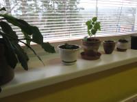 Nové rostlinky už zdobí naši třídu
